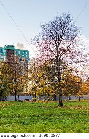 Autumn Urban Landscape And Building In Hightech Architecture. Yellowed Leaves
