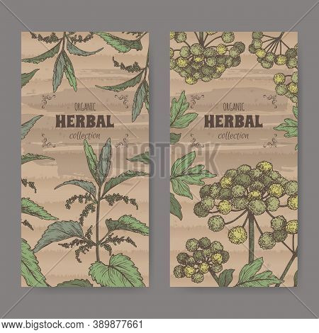 Two Labels With Urtica Dioica Aka Common Nettle And Angelica Archangelica Aka Garden Angelica Color