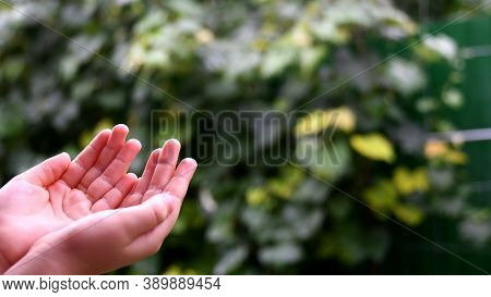 Closeup Of Wet Handful Of Little Child In Rain. Kid Plays In Drizzle Collecting Droplets In Hands. R