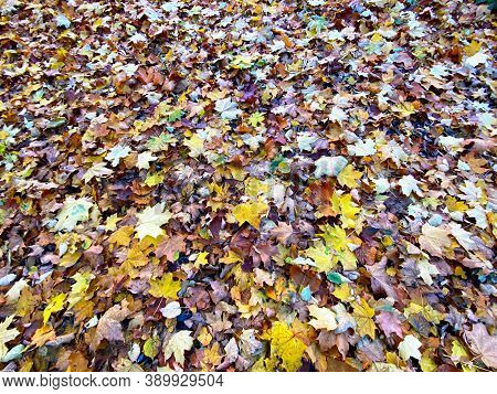 B Nature Ackground With Autumn Colorful Leaves .