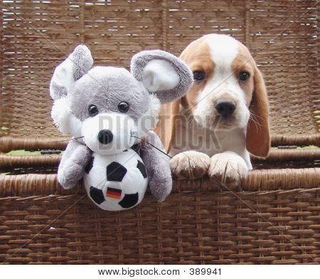 Beagle Mouse