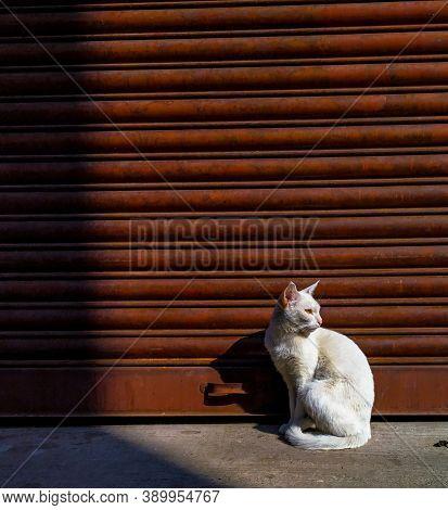 Close Up Of Cat. Street Cat. Domestic Cat. Big Cat, Beautiful Cat. Photography Of Cats. Copyspace