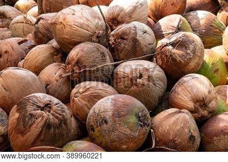 Coconut, Dried Coconut Brown, Coconut Fruit For Background