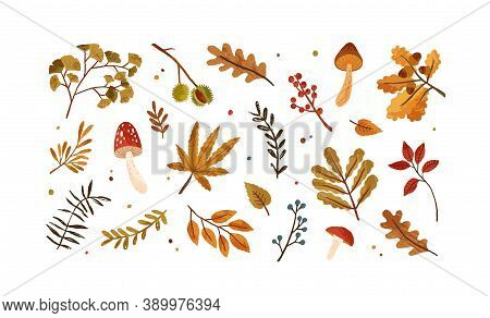 Set Of Dried Autumn Leaves, Berries And Mushrooms Vector Flat Illustration. Collection Of Various Ch