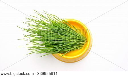 Wheatgrass Plant In A Cat Bowl On A White Background.