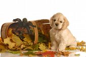 american cocker spaniel puppy sitting beside basket filled with colorful autumn leaves poster