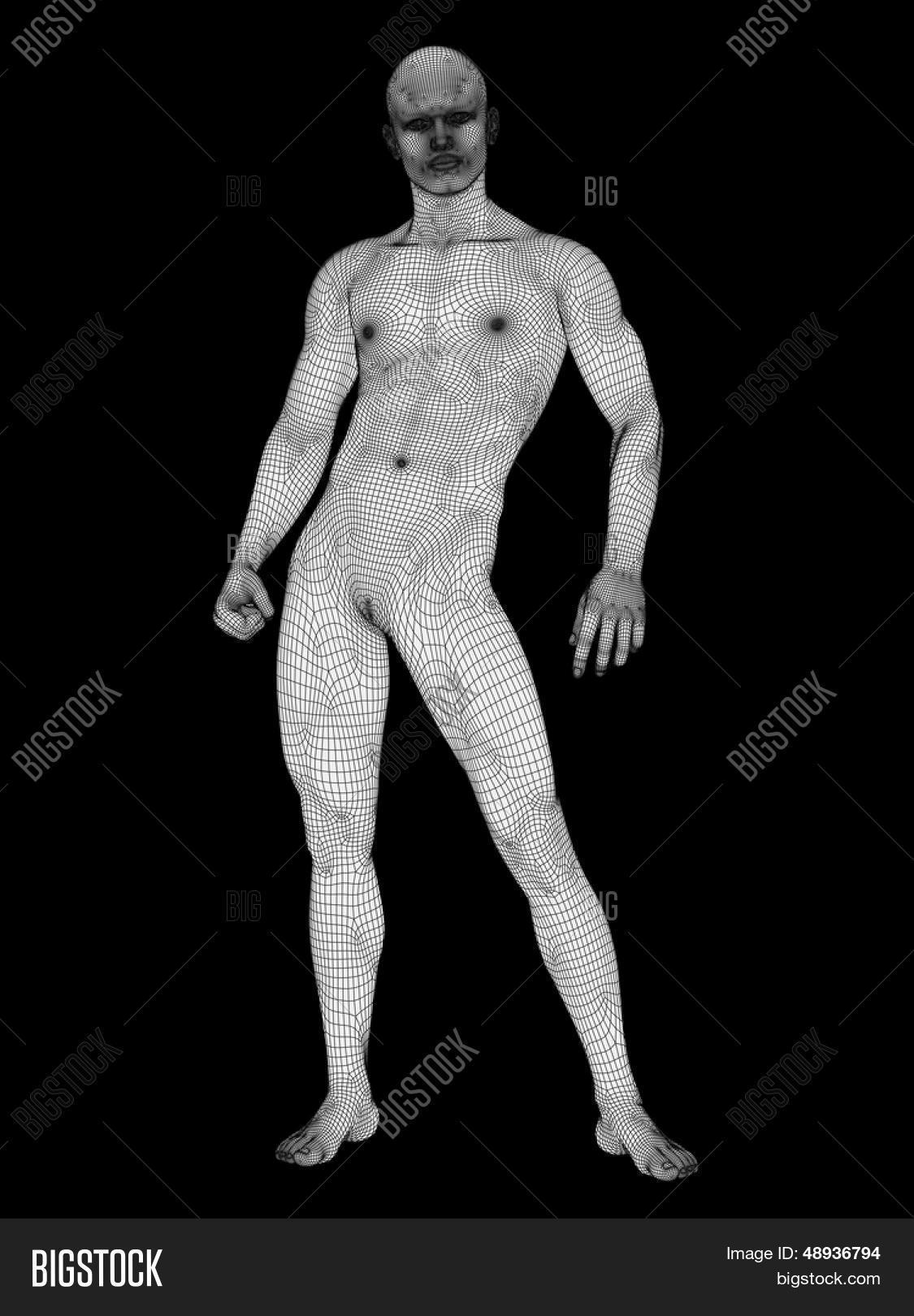 3D Human Male Anatomy Image & Photo (Free Trial) | Bigstock