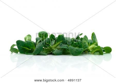 Fresh Salad Isolated On The White Background