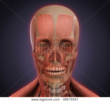 Illustration of Human Face Anatomy. 3D render poster