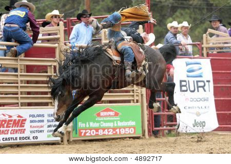 Rodeo - Kelly Timberman Bareback