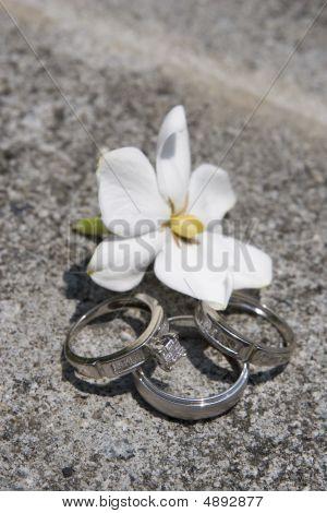 Rings On Granite With Flower
