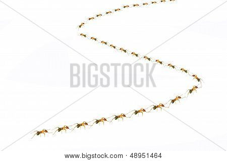 Ants Queue