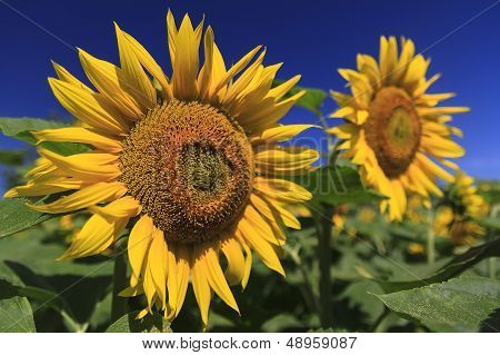 Amongst The Flowers
