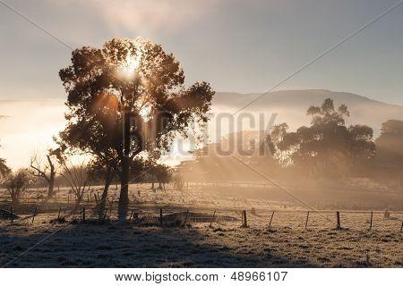 Sunrise In The Yarra Valley In Winter