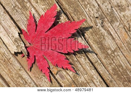 trapped maple leaf in a piece of old weathered wood