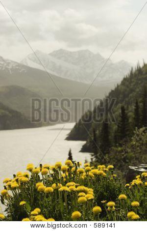 Mountain Landscape With Dandelions