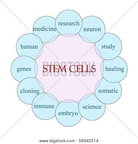 Stem Cells Circular Word Concept