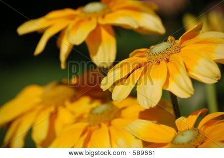 Layered Golden Flowers