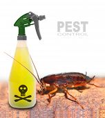 Plastic sprayer with insecticide and big cockroach. Pest control concept.  poster
