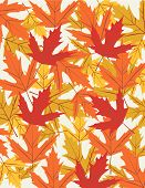 Autumn leaves vector illustration art wallpaper background poster