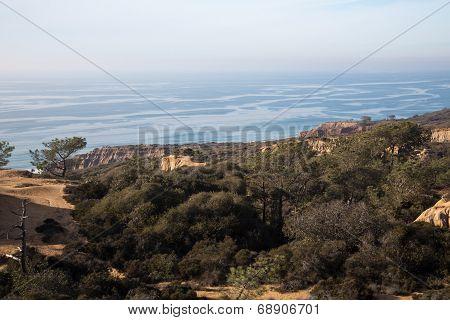 Landscape View of Torrey Pines