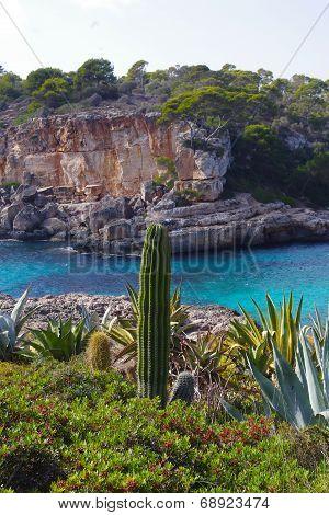 Cactus next to the Mediterranean