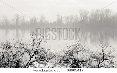 Misty Winter Morning On River Bank