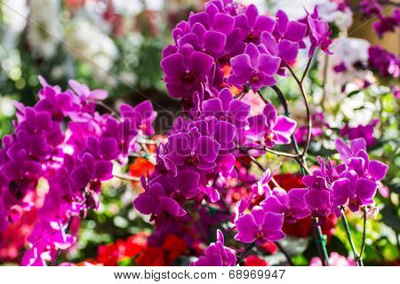 Pink Orchids In The Garden