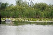 Nature landscape with wild birds in the Danube Delta, Romania poster