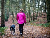 Rear view of a Female walking with Great Dane Puppy along a footpath in a country park poster