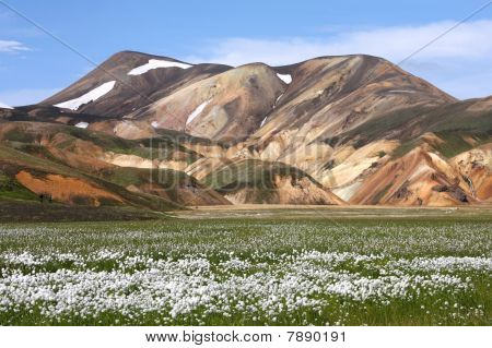 Iceland. Beautiful mountains and white cottongrass flowers. Famous volcanic area with rhyolite rocks - Landmannalaugar. poster