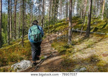 Hiker in woods