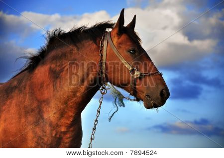 Horse And Clouds