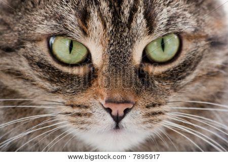 Cat headshot