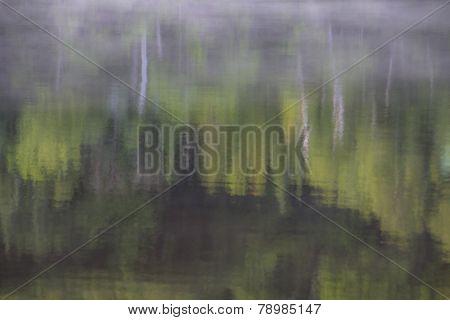 Birch Forest Reflection
