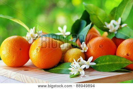 ripe orange fruits and flowers on table