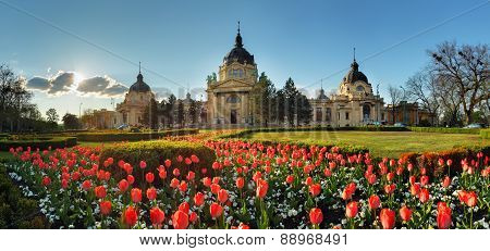 Budapest - spring panorama with flower Szechenyi Spa Hungary poster