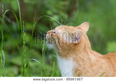 red tabby outside