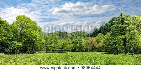 panorama of amazing forest in spring in italy poster