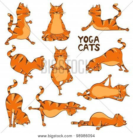 Funny Red Cat Doing Yoga Position.