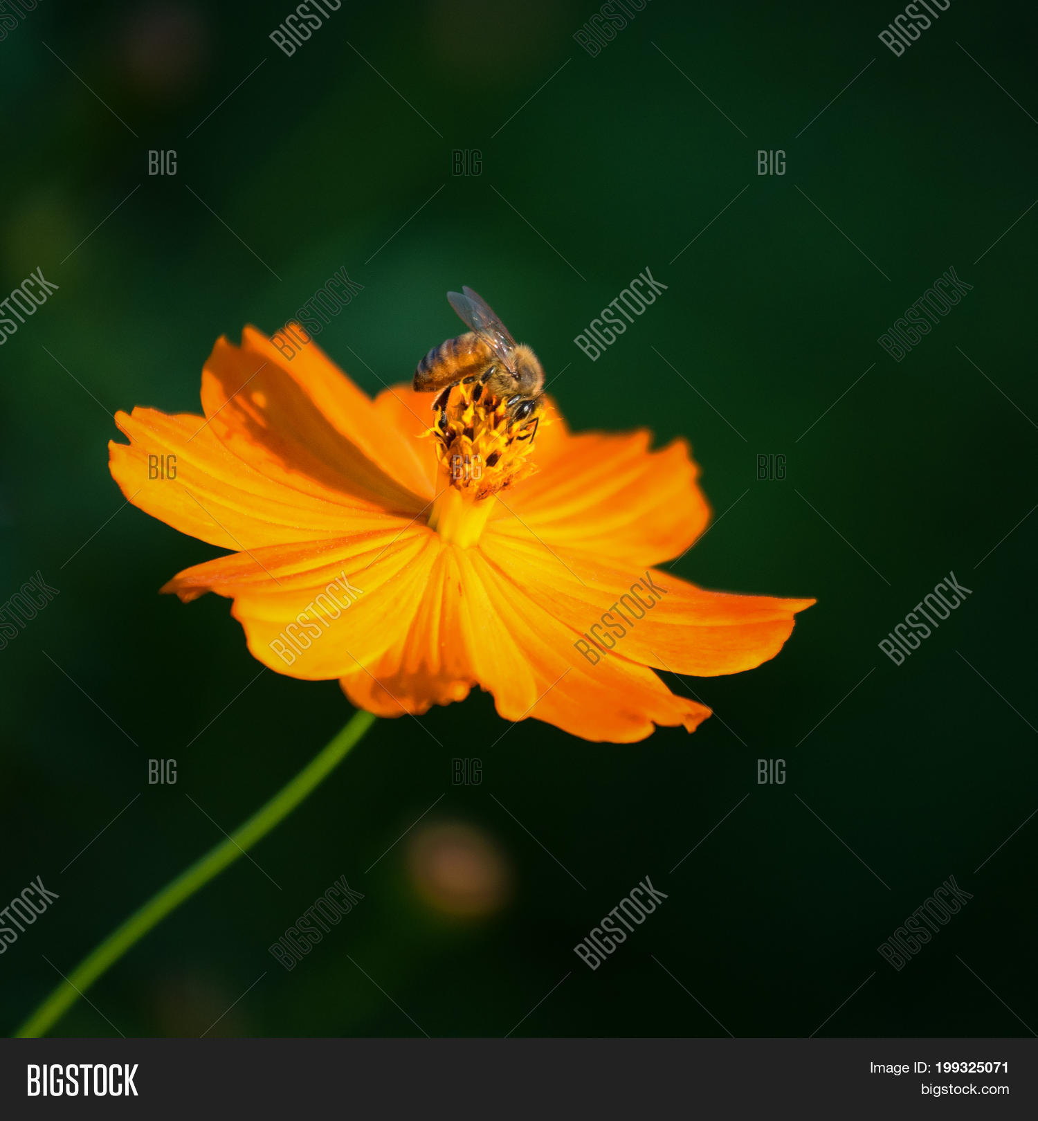 Beautiful Yellow Image Photo Free Trial Bigstock