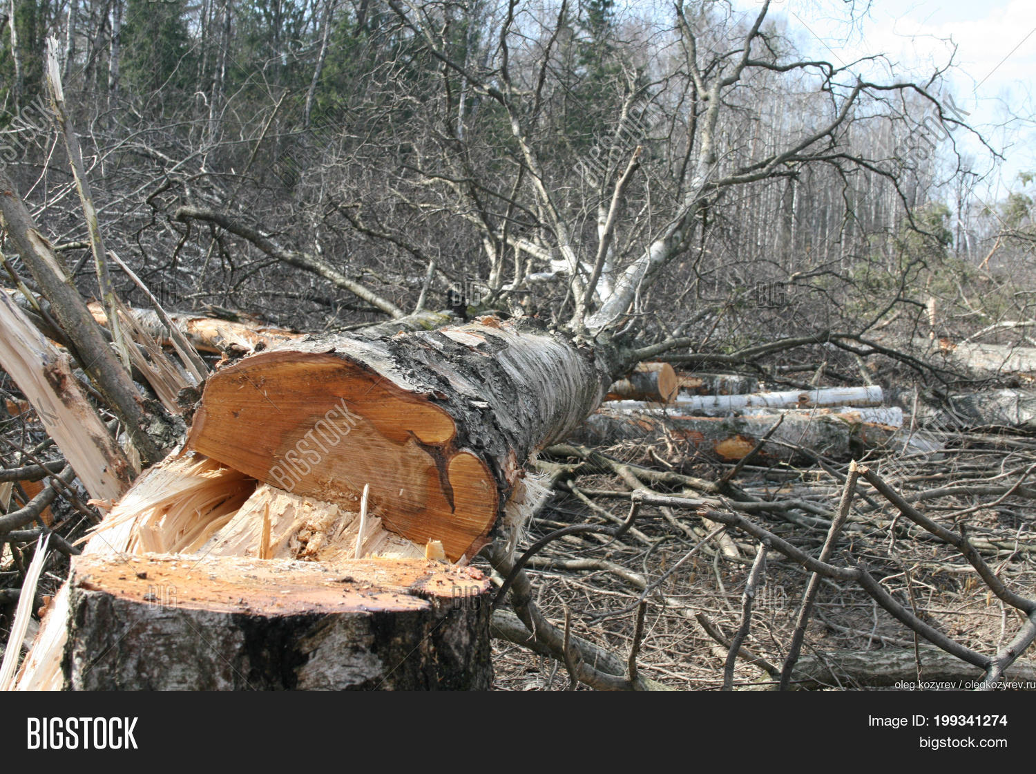 Cut Down Trees In The Forest Ecology And Protection Of Nature Logging