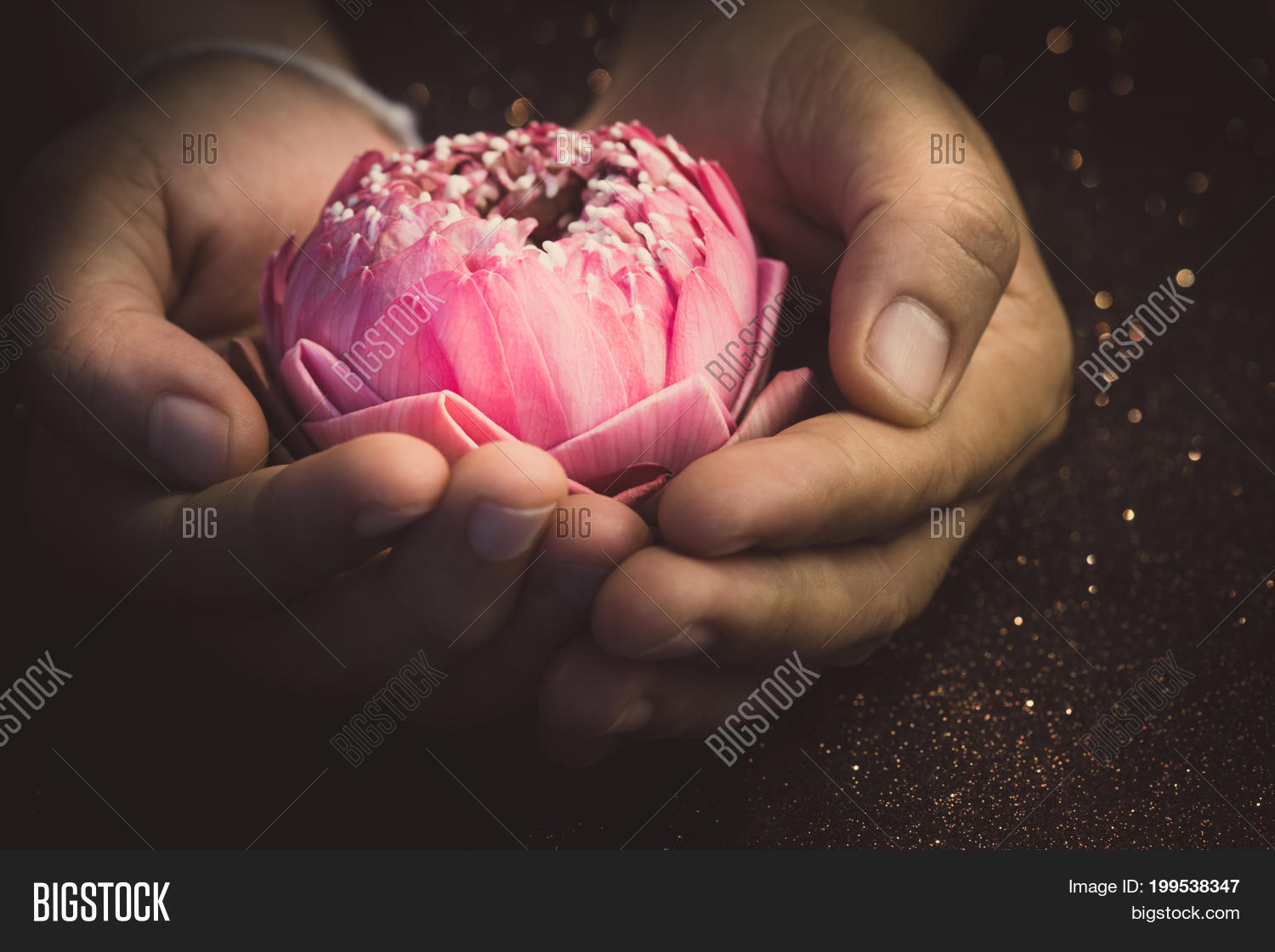 Pink Lotus Flower Image Photo Free Trial Bigstock
