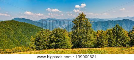 Gorgeous Mountainous Panorama With Forest