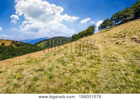 Path To The Forest Through Mountain Meadow