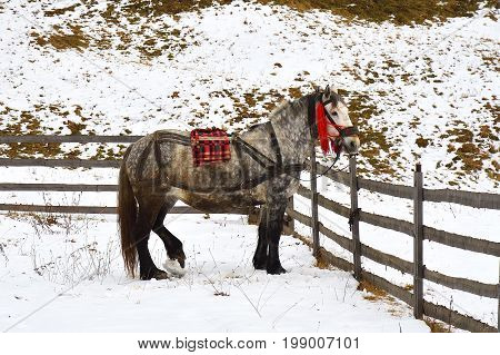 Horse on snowy winter day. Shot of a thoroughbred horse in winter corral on a sunny day rural scene