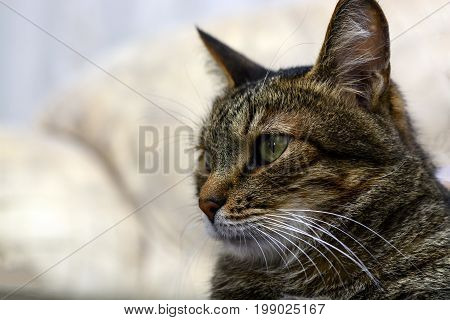 Black Gray Cat With Green Eyes Staring In Camera