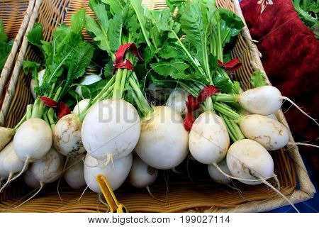 A bunch of freshly picked white turnips and greens in a basket.