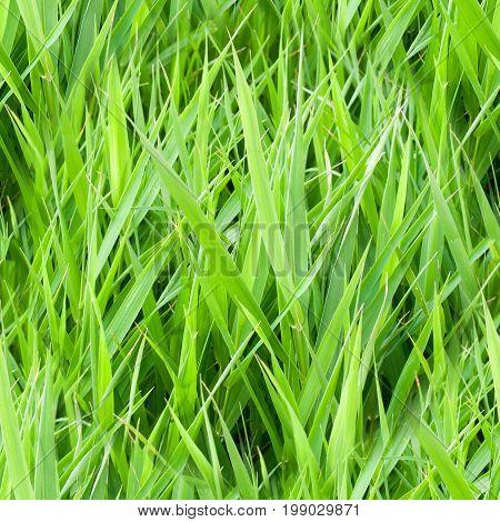seamless summer garden green grass. background texture.