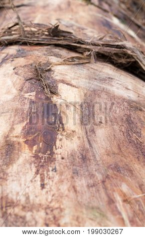 sawn tree trunk without bark. background perspective.